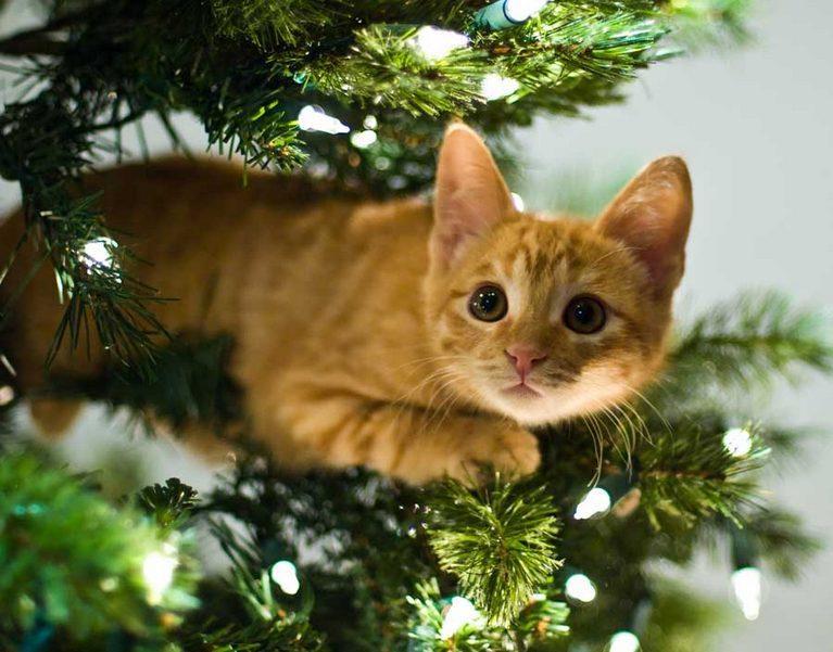 фото елки и котики матрица может